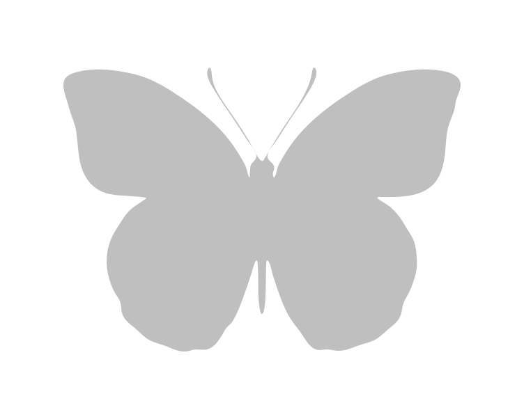 typical recto Reals Wood White (Leptidea reali)
